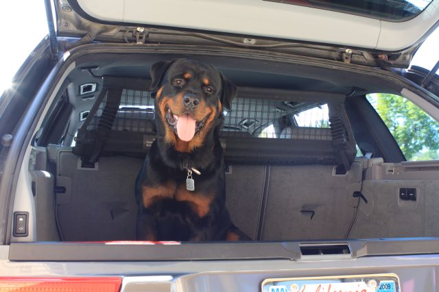 How To Fit A German Dog Into A German Car My E53 Page